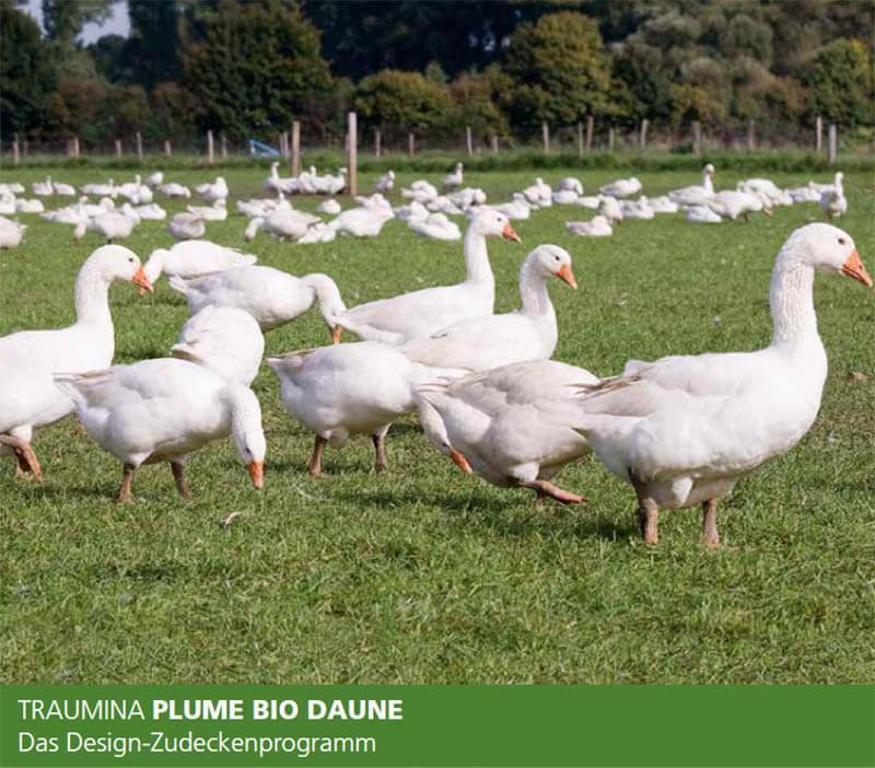 Traumina-Plume-Bio-Daunendecke-Abbildung-freilaufende-Gaense