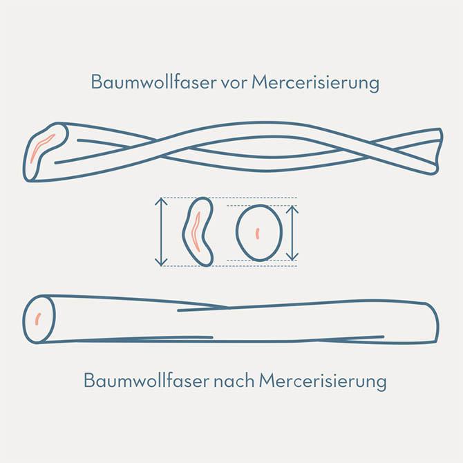 Formesse-Baumwollfaser-nach-Mercersierung